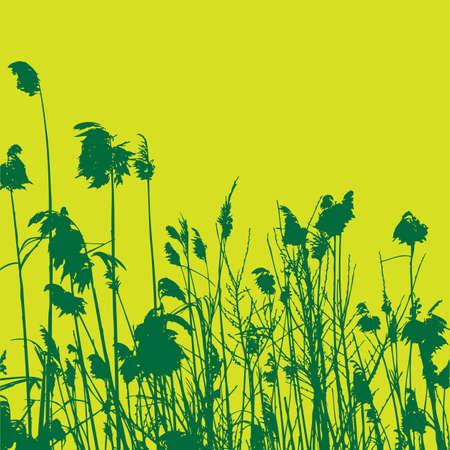 cattail: reeds Illustration