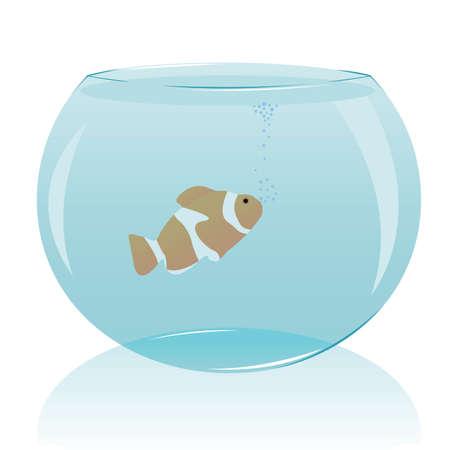 gold fish bowl: aquarium