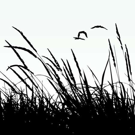 reeds: reeds Illustration