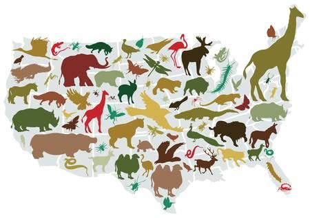 Amerikaanse dieren Vector Illustratie