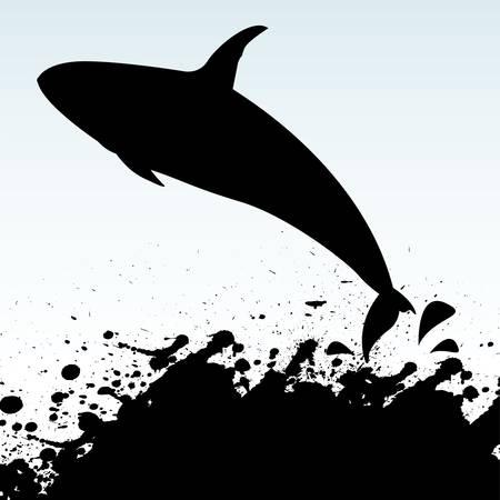 killer whale: killer whale