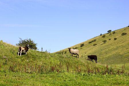sheep amongst the hills under a summer sky Stock Photo - 5489996