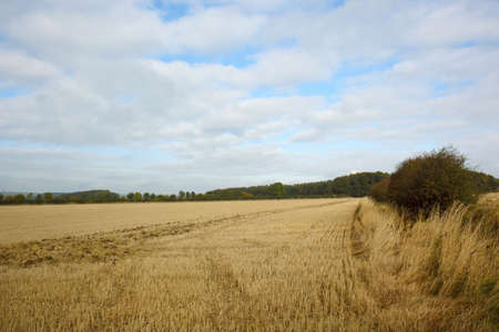 an agricultural landscape with hedgerows and trees under a blue and white sky Stock Photo - 5733079