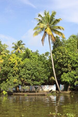 a single palm tree by a river in the beautiful keralan backwaters photo