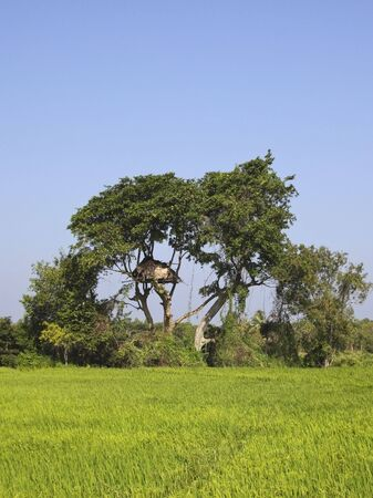 anuradhapura: a tree house overlooking a rice paddy in anuradhapura sri lanka
