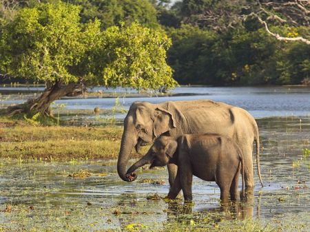 water hole: a mother and baby elephant at a water hole in yala national park sri lanka Stock Photo