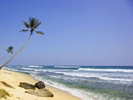 zancos: �rboles de Palma por el oc�ano indio con zancos de pescadores en el fondo en thalpe en sri lanka