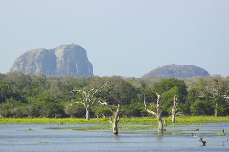 a view across the lake with dead trees towards the jungle of yala national park in sri lanka with the famous landmark elephant rock under a blue sky Stock Photo - 6680944