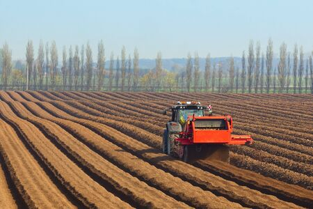 crop cultivation: specialist agricultural machinery preparing the soil for sowing carrots against a backdrop of poplar trees and blue sky in springtime Stock Photo