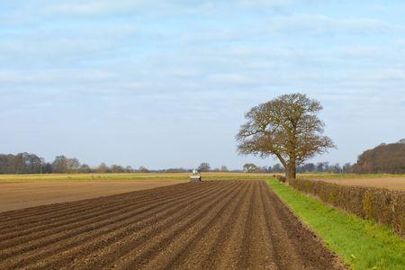 un paisaje agrícola con patatas de siembra en la primavera de tractor  Foto de archivo - 6864872