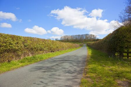 an english country road through rolling countryside with trees and a rookery in springtime Stock Photo - 6859230