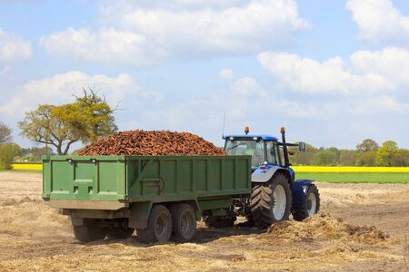 a blue tractor with a green trailer full of freshly harvested carrots leaving the field with a beautiful landscape and blue sky background