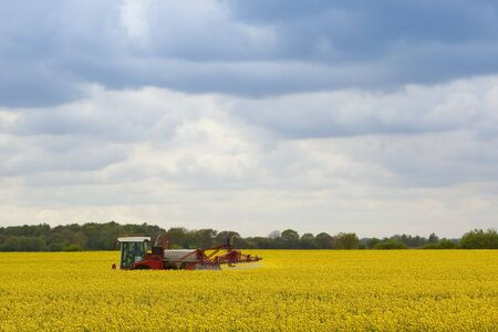 crop sprayer: a red and white crop sprayer treating a field of bright yellow rape seed on a cloudy evening