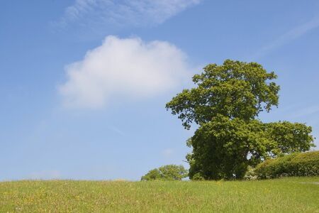 landscape with oak tree overlooking a hillside covered with grasses and wild flowers Stock Photo - 7103217