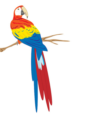macaw:  illustration of a scarlet macaw sitting on a branch on a white background