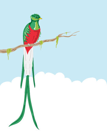 illustration of a resplendent quetzal sitting on a moss covered branch against a blue sky Illustration