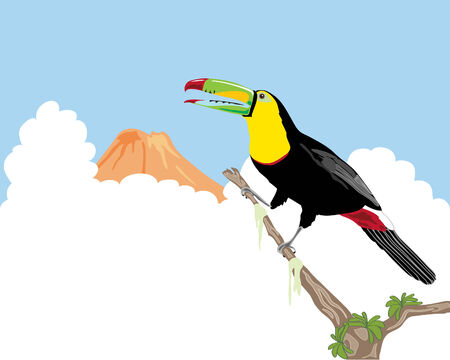 keel: a hand drawn illustration of a keel billed toucan sitting on a branch against a backdrop of clouds and volcano