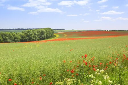 english lanscape with poppies flowering amongst oilseed rape on the yorkshire wolds Stock Photo - 7187377