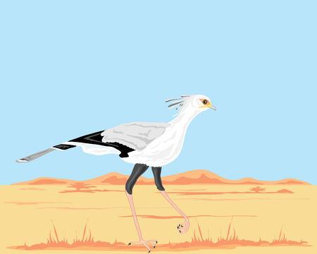 hot secretary: a hand drawn illustration of a secretary bird sagittarius serpentarius walking in a hot landscape in africa under a blue sky