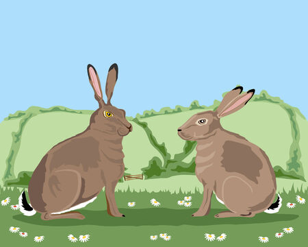a hand drawn illustration of two hares loking at each other in a summer landscape under a blue sky Stock Vector - 7201801