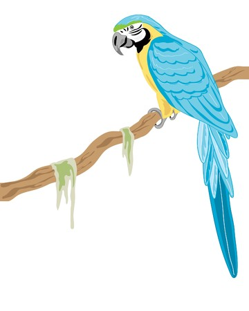 a hand drawn illustration of a gold and blue macaw on a branch on a white background