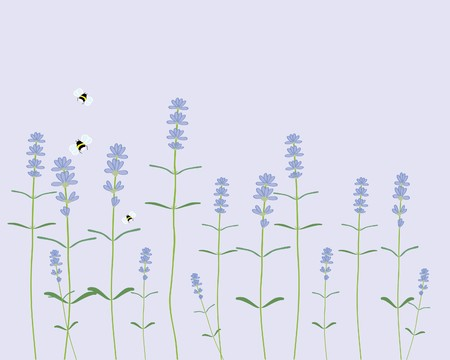 a hand drawn illustration of a row of lavender flowers with bees on a light purple background Illustration