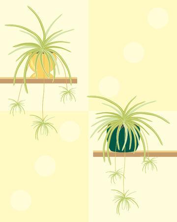 원예: a hand drawn illustration of two spider plants in pots on sheves on a pale yellow background 일러스트