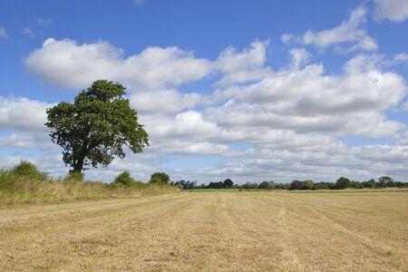 hay field: paesaggio inglese con nuvole edificio in un cielo blu su un campo di fieno e solitario albero di quercia Archivio Fotografico