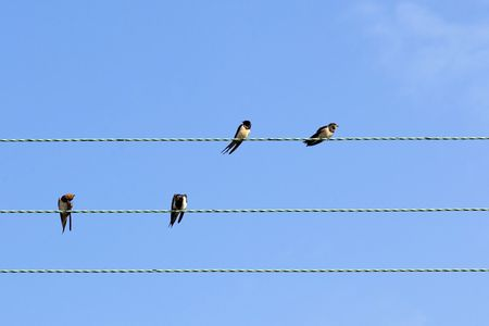 four swallows on wires under a blue sky photo