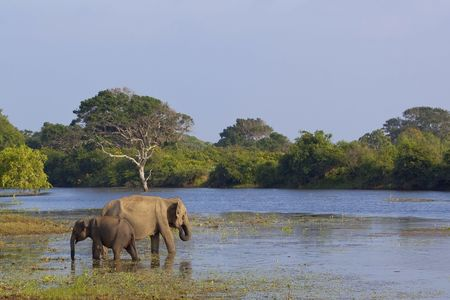 a mother and baby elephant in yala national park sri lanka Stock Photo
