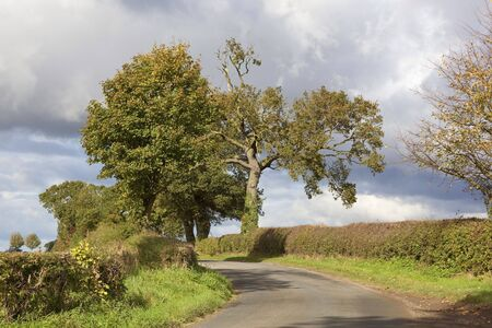 grass verge: tree lined country road on a stormy autumn day in england Stock Photo