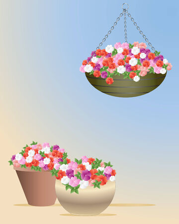 impatiens: an illustration showing a hanging basket and two containers with impatiens in full bloom on a blue and yellow background Illustration