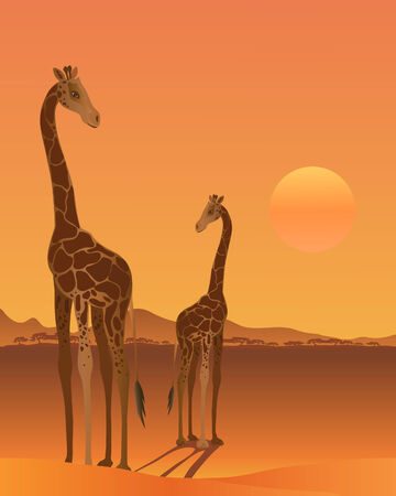 a illustration of two giraffe in a hot african landscape with a setting sun Stock Vector - 8379220