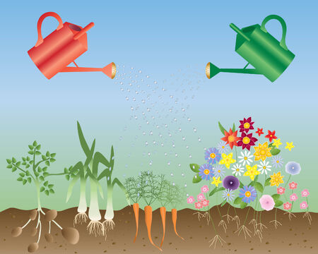 an illustration of two watering cans with a row of vegetables and flowers on a blue and green background Vector