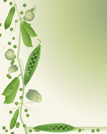 green peas: an illustration of peas in a pod on a green background