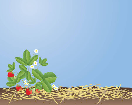 perishable: an illustration of a strawberry plant with fruit and flowers against a summer blue sky