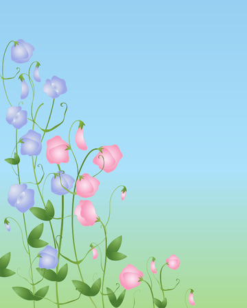 sweet pea: an illustration of sweet pea flowers in pink and purple on a green and blue background