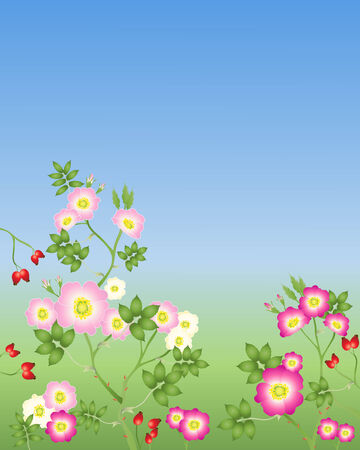 rose hips: an illustration of wild roses in various shades of pink with buds and rose hips on a green and blue background Illustration