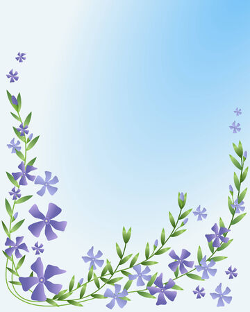 minor: an illustration of vinca minor with leaves and flower buds on a blue background