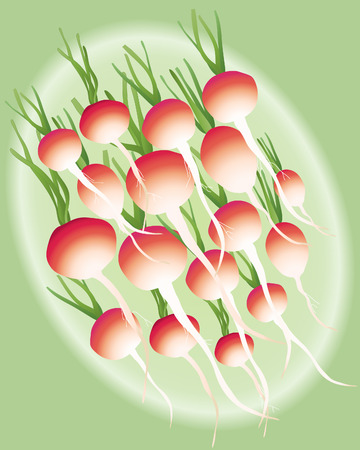 elipse: an illustration of a group of radishes arranged in a green elipse Illustration