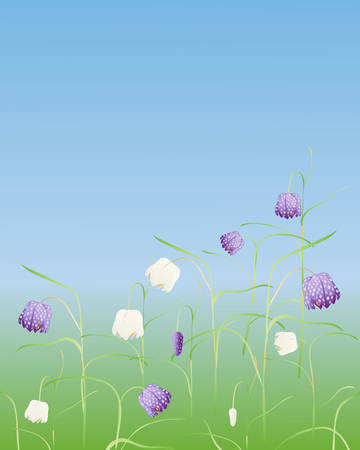 an illustration of snakes head fritillaries growing in a meadow under a blue sky Stock Vector - 8499310