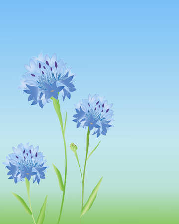 an illustration of three cornflowers in a meadow in summer Stock Vector - 8524382