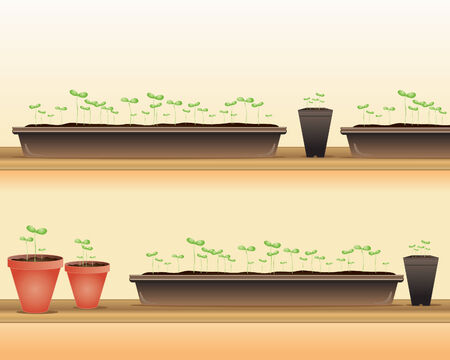 indoor garden: an illustration of trays and pots of seedlings on wooden benches in springtime