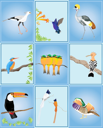 an illustration of different types of birds from around the world on a blue rectangle background Vector