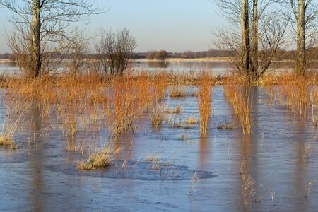 english winter landscape with young willow saplings grown for bio fuel and poplar trees growing through the ice photo