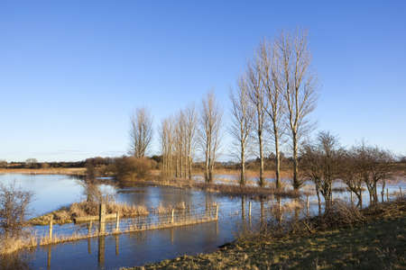 poplar  banks: a flooded field with poplar trees and a barbed wire fenceinwinter under a blue sky Stock Photo
