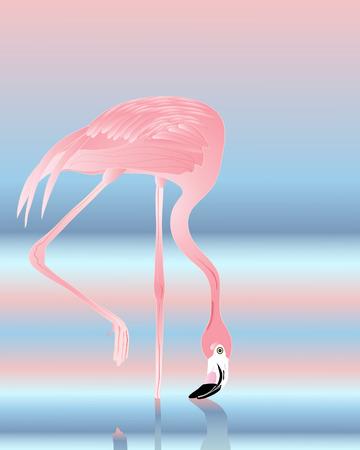 flamenco ave: una ilustraci�n de un hermoso flamenco rosado con reflexi�n azul y rosa sobre el agua Vectores