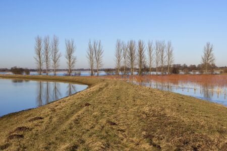 poplar  banks: english winter landscape with a view along the river derwent flood banks with poplar trees and willow saplings;being grown for bio fuel under a blue sky