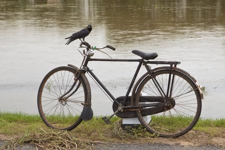 handle bars: Cuervo de casa encaramada en bares de identificador de bicicleta con fondo de agua de la inundaci�n
