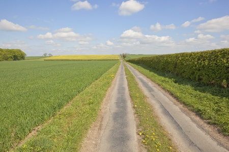 an english landscape with a farm track running through the patchwork fields of the yorkshire wolds in springtime Stock Photo - 9360552